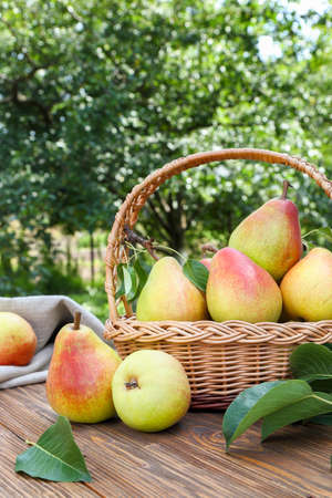 Ripe pears on a wooden table in the garden
