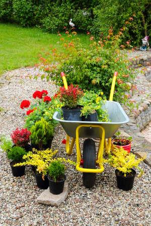 Seedlings of flowers and trees plants in pots in the garden wheelbarrow