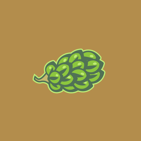 simple color illustration of a hop fruit in vector