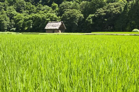 Landscape of lush green meadow and a house at the end photo