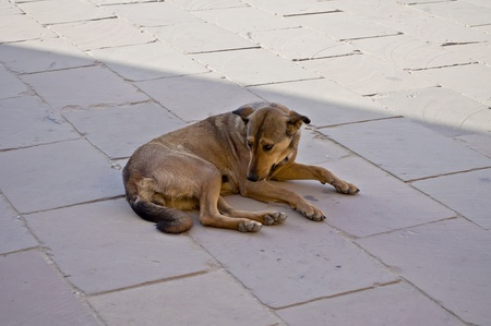 Dog alone and abandoned ,and very sad photo