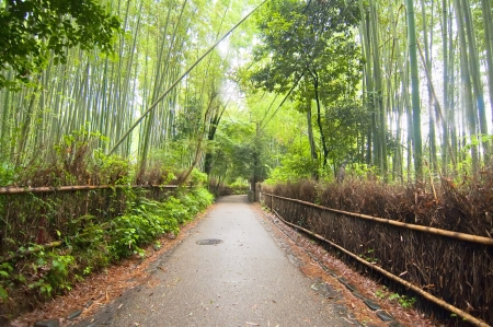 Way through a forest of bamboo photo