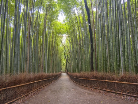 Way through a forest of bamboo Stock Photo - 15166404