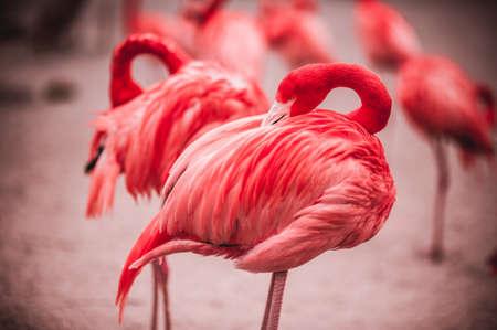 Pink flamingos crowd standing against green background Standard-Bild