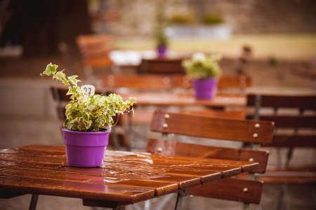 비 후 젖은 카페 테이블에 냄비에 꽃 스톡 콘텐츠