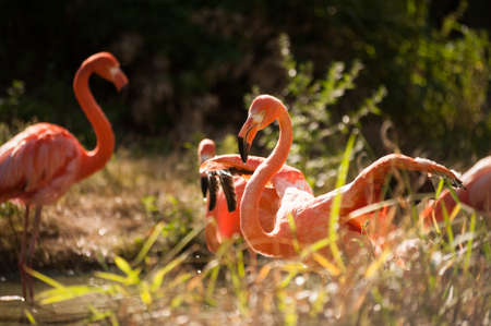 flamingos: group of pink flamingos against green background Stock Photo