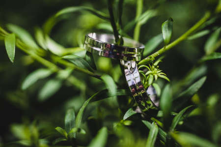white gold: White gold wedding rings hanging on a green tree