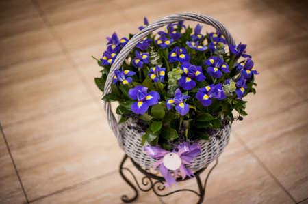 iris reticulata: bouquet of irises in a basket on table