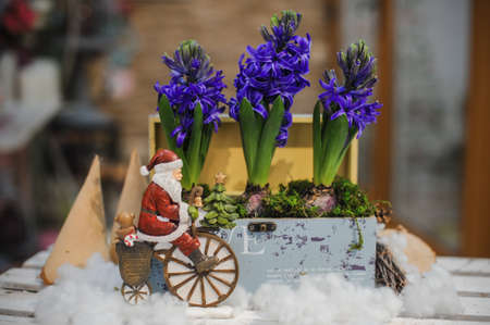 santa claus on bicycle toy composition with hyacinth flower Stock Photo