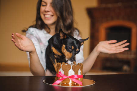 treat: woman and toy terrier with dog cake infront on a birthday party