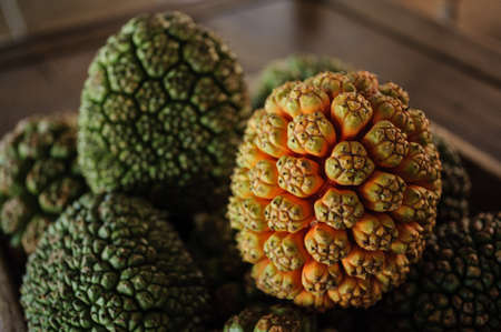 A group of Fruits Of Pandanus Tree Stock Photo