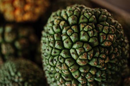 Common Screwpines fruit Pandanus utilis close up Stock Photo