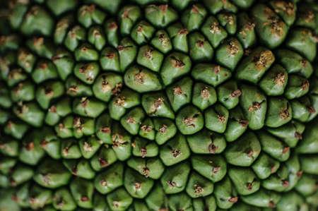 tectorius: Screw Pine Pandanus tectorius or Pandanus odoratissimus texture