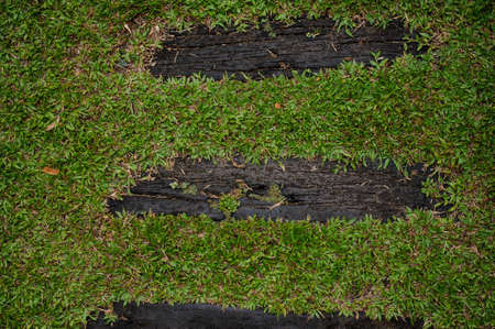 boardwalk trail: Wooden boardwalk path through field of tall green grass  horizontal