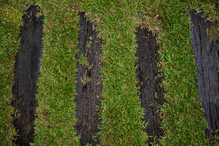 personal god: Wooden boardwalk path through field of tall green grass  horizontal