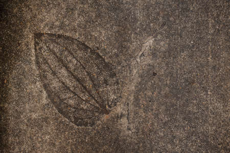fossilized: Leaf imprint on cement texture horizontal  background