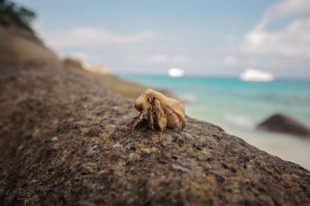 decapods: Hermit crab close-up on a background of stone and ocean Stock Photo
