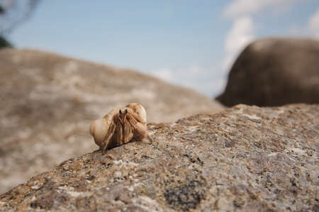 Hermit crab close-up on a background of stone and ocean Stock Photo