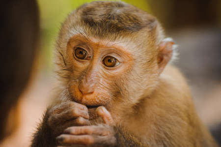 one cute baby monkey eating close up Stock Photo