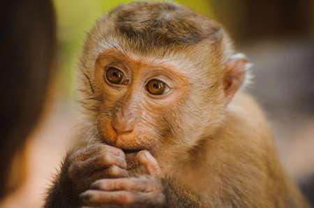 dishy: one cute baby monkey eating close up Stock Photo