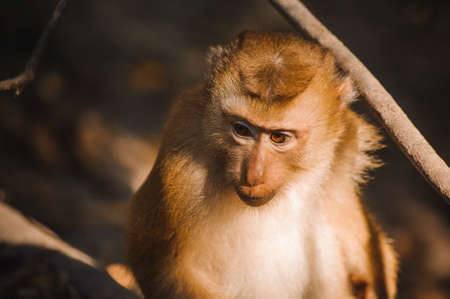 one cute baby monkey close up photo Stock Photo