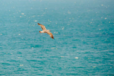 Top view of silhouette of flying seagull. Bird flies over the Sea. Free flight Stock Photo