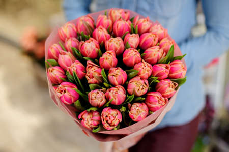 Woman in a blue shirt is holding a beautiful and elegant bouquet of pink tulips