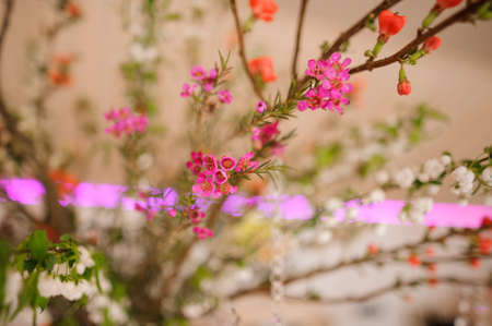 Beautiful flower composition of tiny and cute little pink flowers beautiful flower composition of tiny and cute little pink flowers on the bright and blurred background mightylinksfo