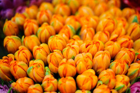 Amazingly beautiful bouquet of close buds of orange tulips decorated with green leaves in flower shop Stock Photo