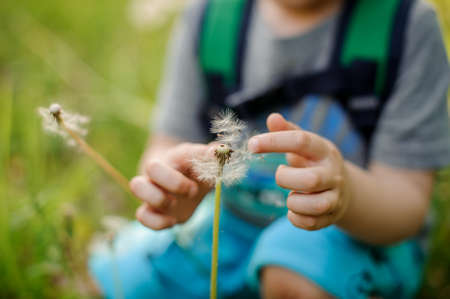 Little boy with a backpack sitting in the grass and touching a white dandelion on spring day Stock Photo