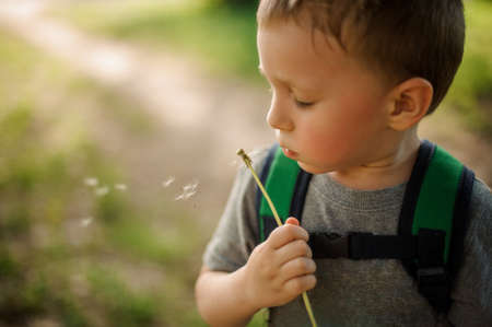 Cute little boy with a backpack blowing a white dandelion walking in the garden on sunny day