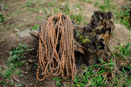 Neatly folded climbing rope lies on a old withered tree stump