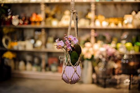 Beautiful rose color orchid with green leaves in the pink pot suspended on ropes 版權商用圖片