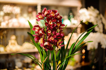 Beautiful red color orchid with green leaves 版權商用圖片