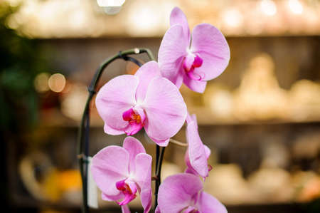 Beautiful pink color orchid with green leaves