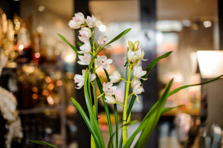 White orchid branch with a pink core with green leaves in the blurred background of the flower shop 版權商用圖片