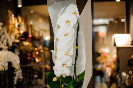 Beautiful white orchid branch with yellow core with green leaves