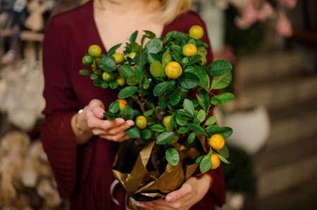 Close-up of girl with small tangerine tree in pot wrapped in gold paper Stock fotó