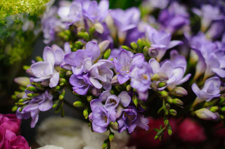 Beautiful bouquet of purple freesia in the transparent wrapping paper in the blurred background in the flower shop Stock fotó