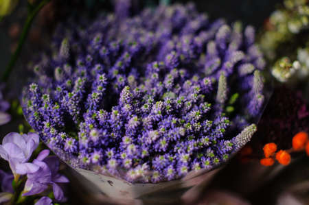 Beautiful bouquet of purple muscari in the transparent wrapping paper in the blurred background of the flower shop