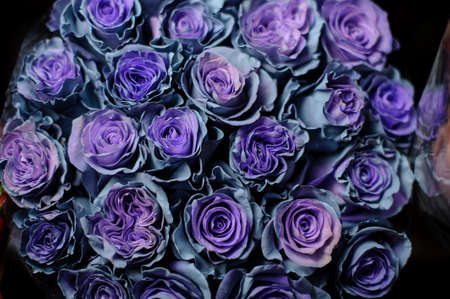 Beautiful bouquet of blue roses in the transparent wrapping paper Stock fotó