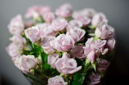 Beautiful bouquet of violet pink roses in the transparent wrapping paper in the blurred background in the flower shop