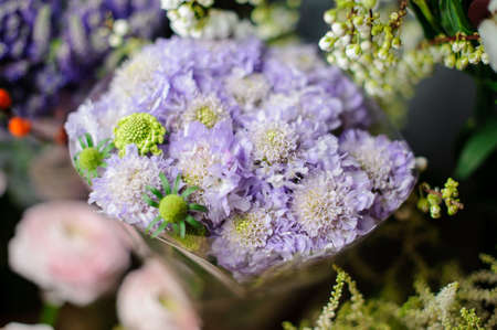 Beautiful bouquet of the purple golden-daisy in the transparent wrapping paper Stock fotó