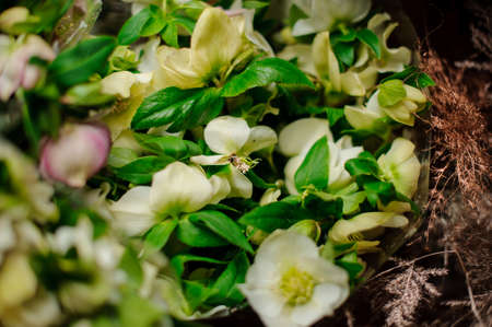 Spring bouquet of little white anemones with a green leaves in the transparent wrapping paper Stock fotó