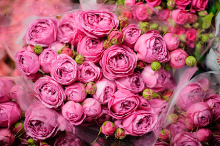 Bouquet of pink peony roses with closed green buds in the transparent wrapping paper in the blurred background in the flower shop Stock fotó