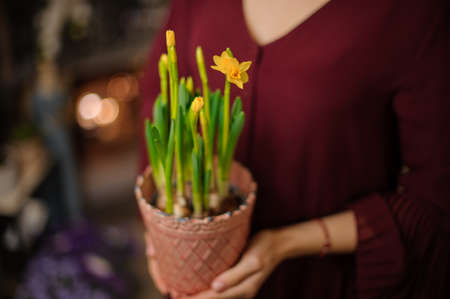 Woman holding a little peach color pot with a green Narcissus with yellow flowers
