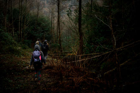 Group of friends walking with backpacks in the dark forest 写真素材