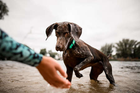 lovely dog attentively looks at the owners hand