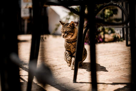 view through the fence on tabby cat sitting on the asphalt outdoors