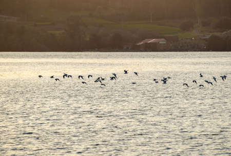 landscape of sea birds at sunset